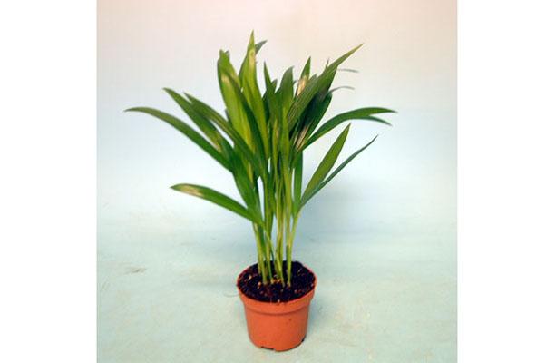 Plantas De Interior Sin Flores. Free Patrn Sin Fisuras Con Las ...